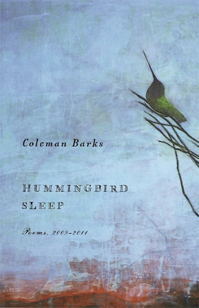 Hummingbird Sleep
