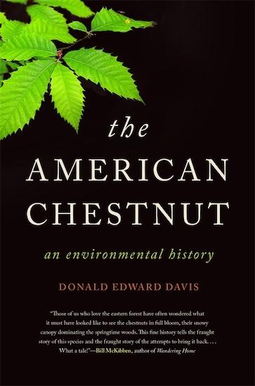 The American Chestnut